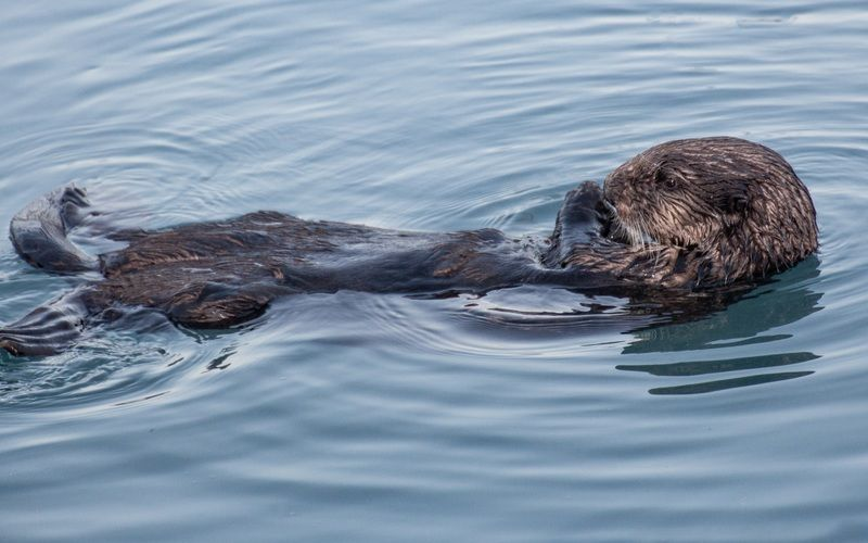 Track Wild Otters in Cape Point