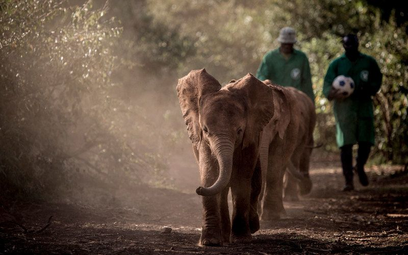 Adopt an African elephant and feed a Rothschild's giraffe