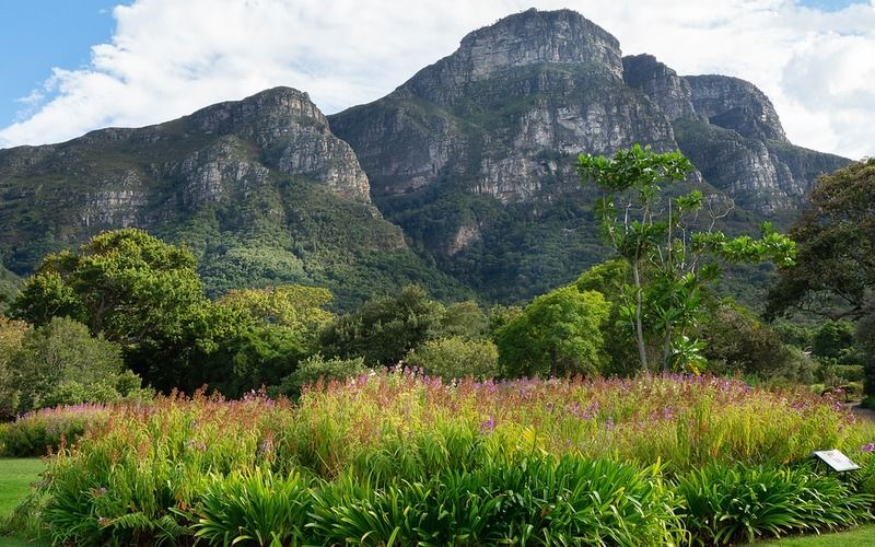 Kirstenbosch National Botanical Gardens with lunch at the Chefs Warehouse