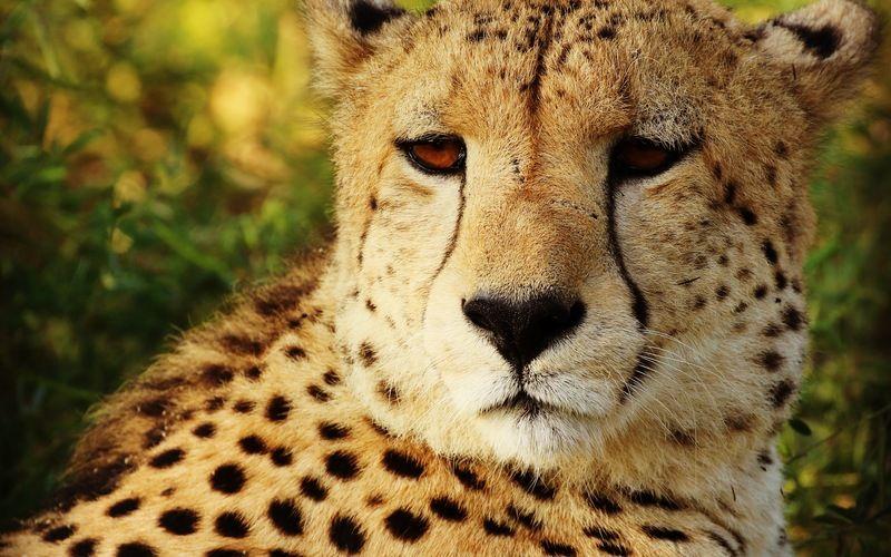 Endangered Species & Rehabilitation Experience